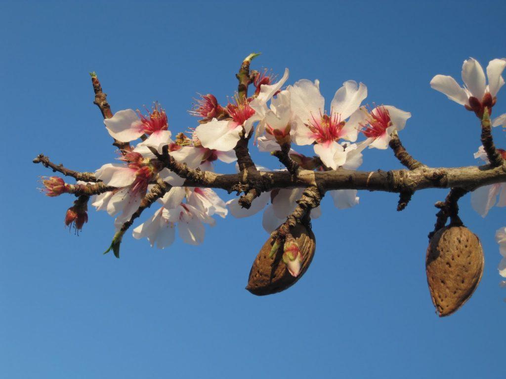 Mese a lázadókról és a mandulafa virágáról