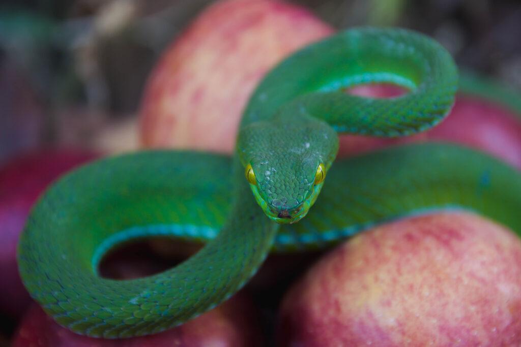 A kígyó filozófiája